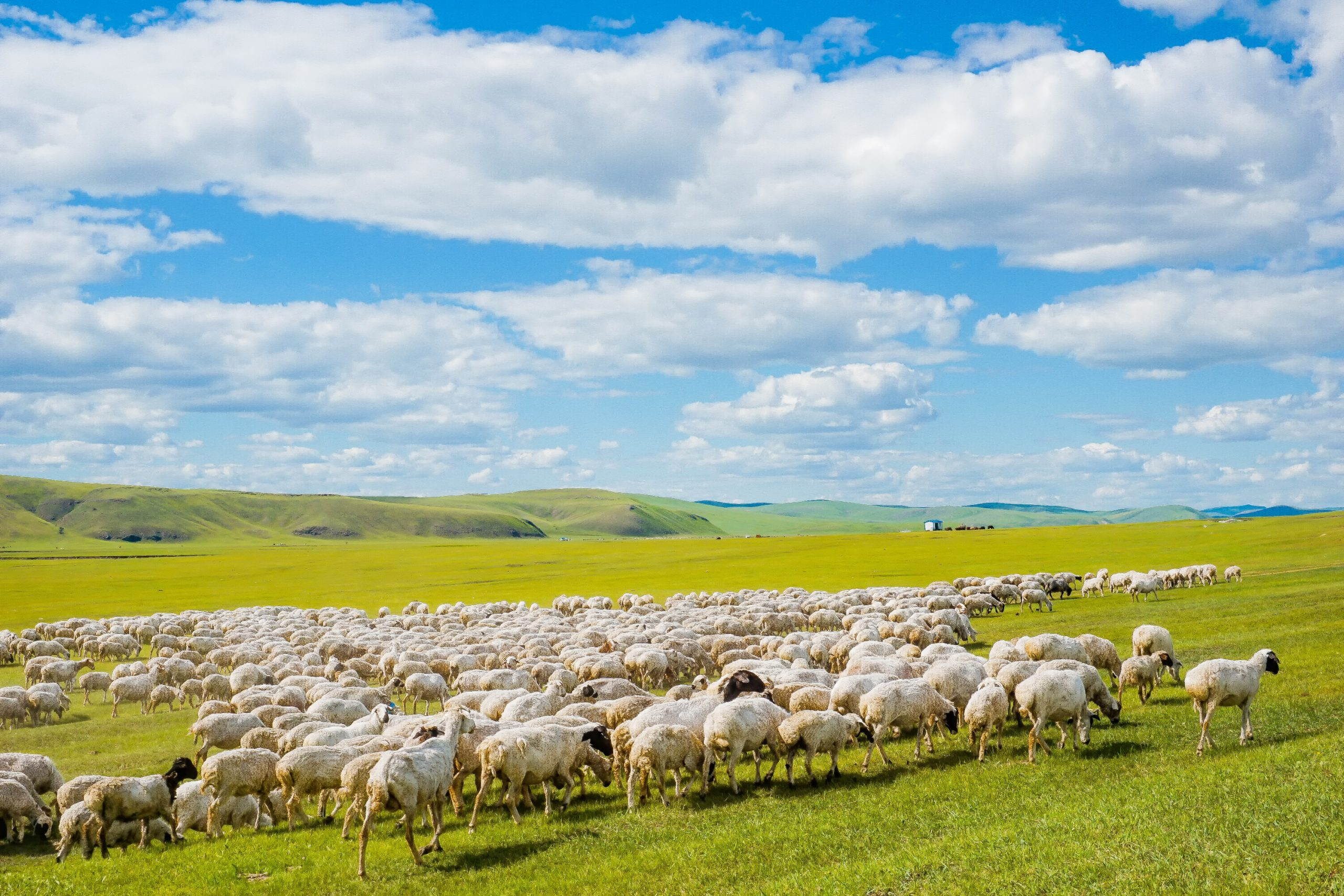 呼伦贝尔: 不可错过的辽阔草原和兴安秋色
